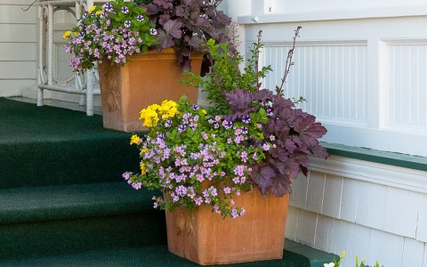 dark green stairs leading to hotel entrance lined with flower pots