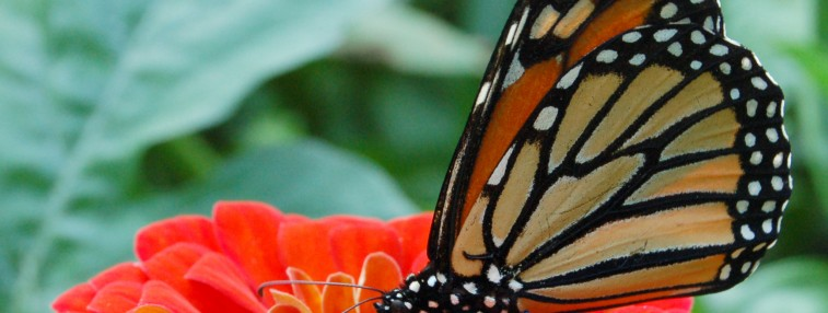 Monarchs and More: Mackinac Island's Butterfly Conservatory