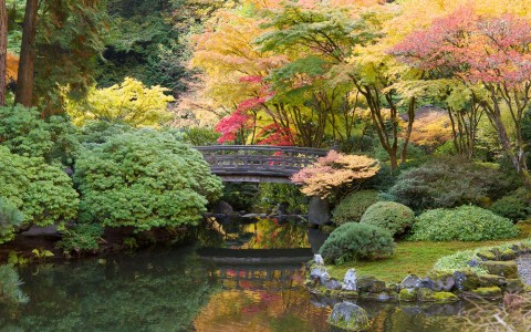 japanese garden with lots of greenery and a lake