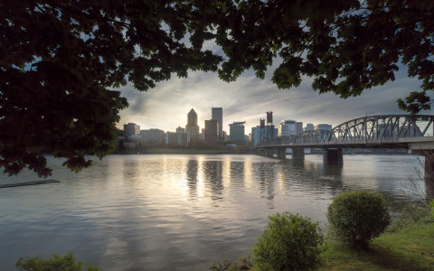 portland skyline under the trees