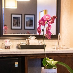 pink orchid as decor for bathroom