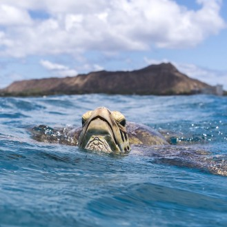sea turtle with head above the water