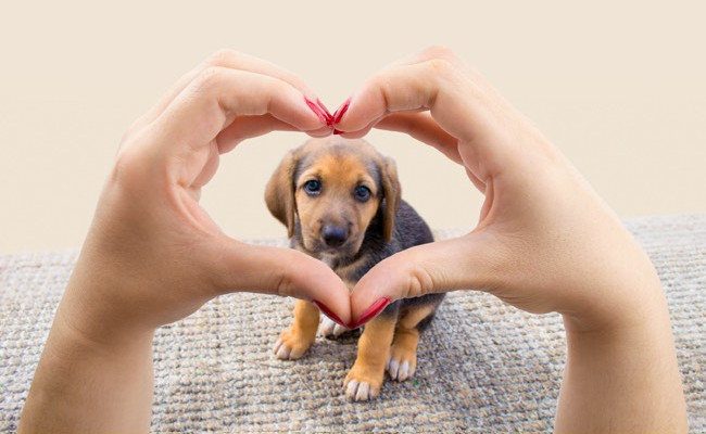 woman making a heart shape with hands in front of a puppy