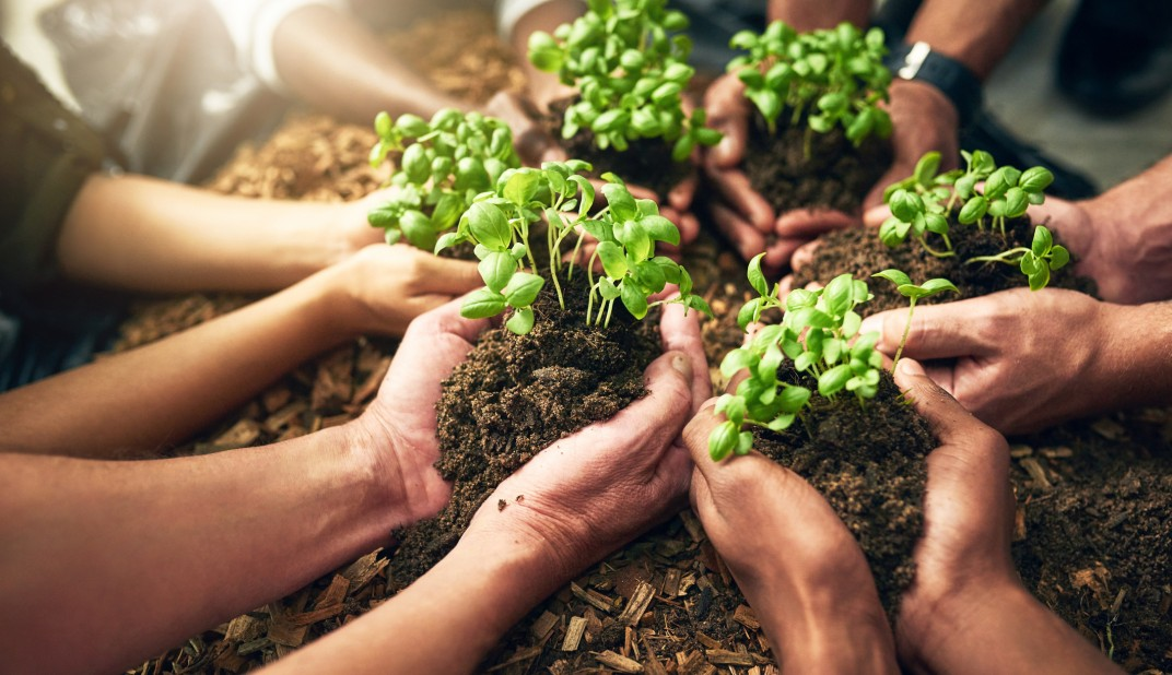 people holding plants and soil in their hands