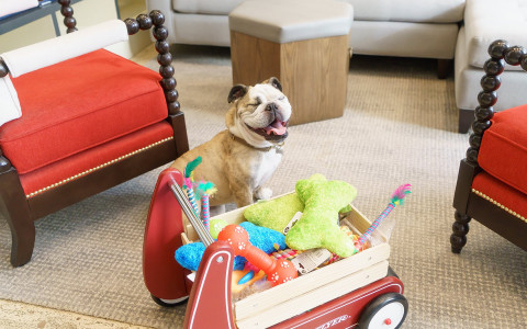 Smiling dog with wagon full of toys
