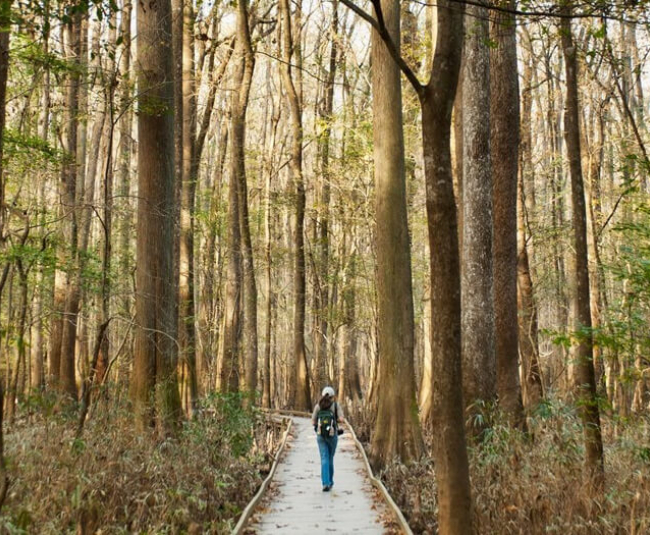 woman hiking through trail in woods