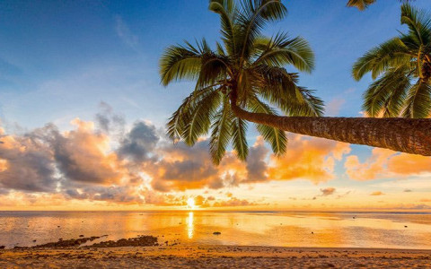 palm tree at beach with sunset