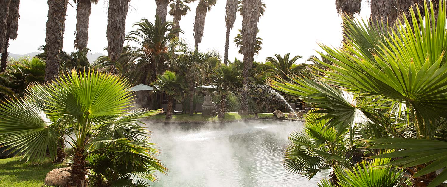 steam coming off a large pond surrounded by leaves and palm trees