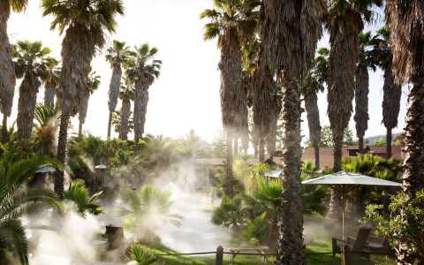 steam coming off a body of water surrounded by palm trees and a walkway