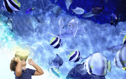 child wearing virtual reality glasses looking at fish
