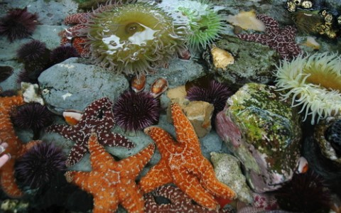 tide pool animals9