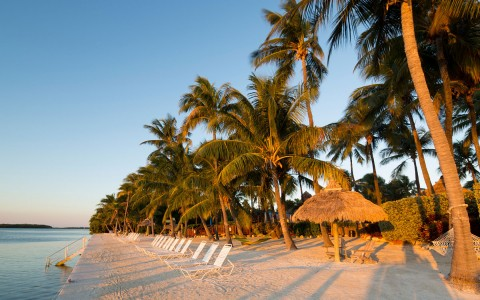 Islamorada beach covered with palm trees