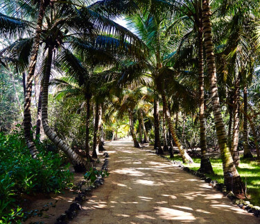 Path lined with palm trees