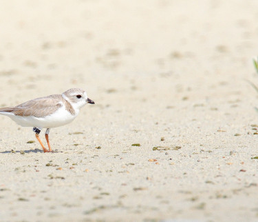 small bird walking on sand