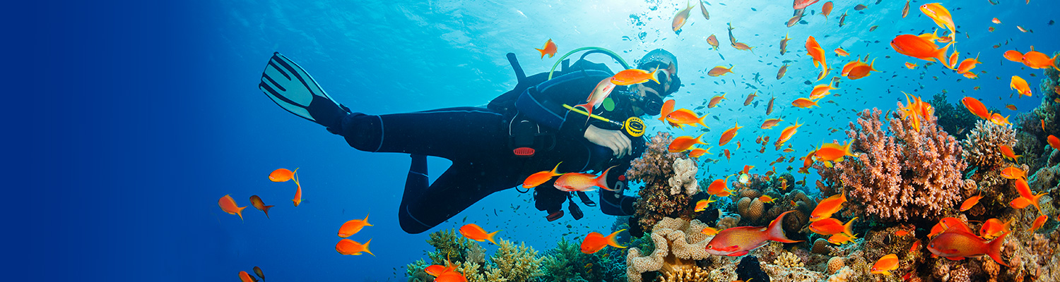 man scuba diving next to orange fish