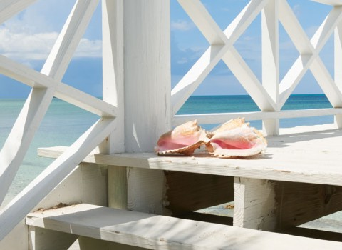 conch shells on the deck