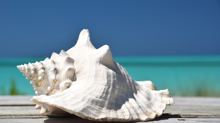 Large white conch shell with ocean in the back