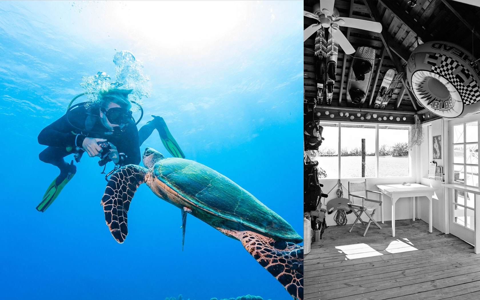 turtle and diver and a black and white photo of hotel interior