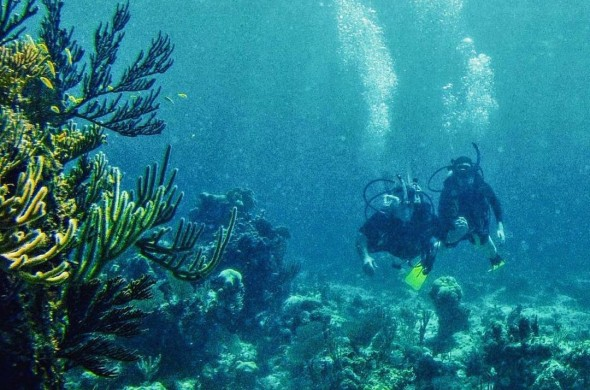 two people scuba diving on a reef