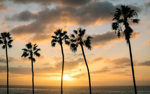 palm trees next to ocean
