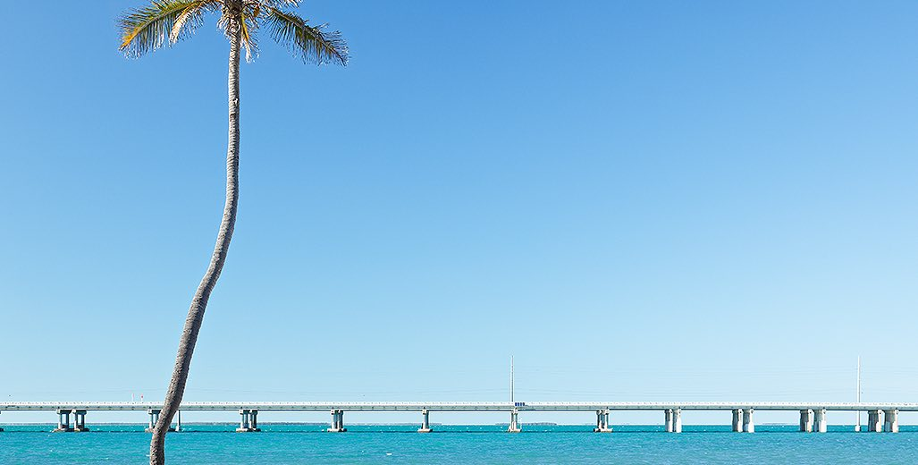 bridge over the water and tall palm tree