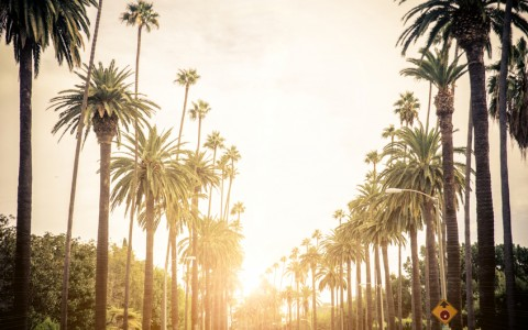 palm tree lined street in LA