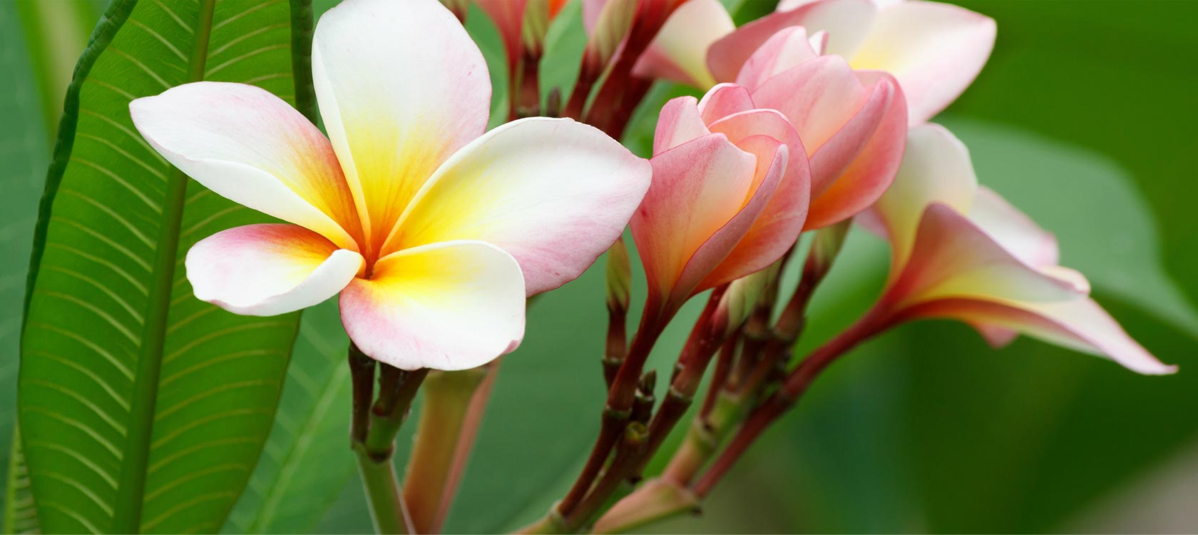 a close up of tropical flowers