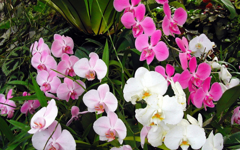 Stop and Smell the Orchids
