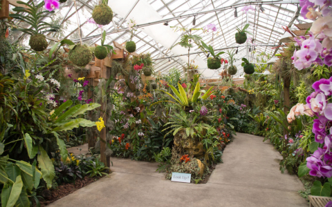 Orchid Garden in a greenhouse with a variety of plants