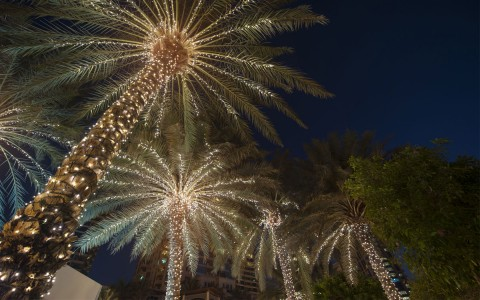palm trees wrapped in Christmas lights lite up