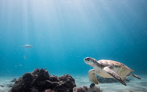 sea turtle and a fish swimming in water