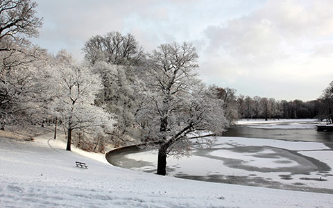 snow covering ground and trees in park