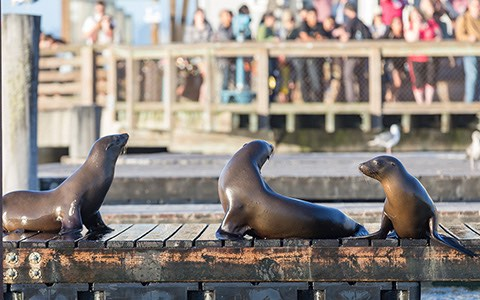 seals lounging on wooden deck