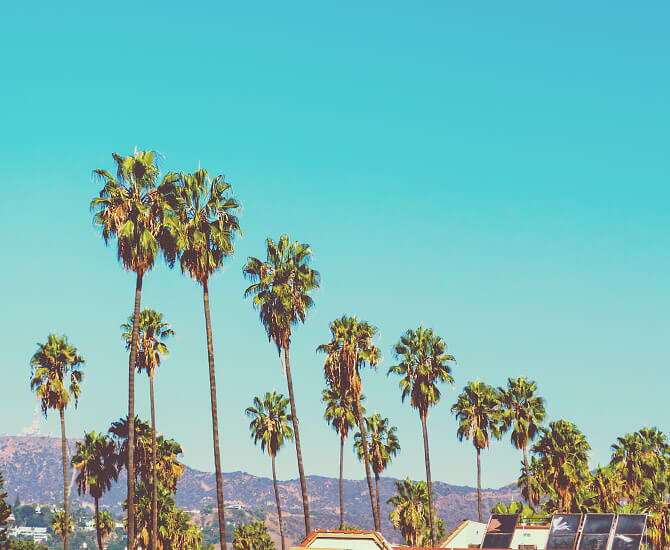 California palm trees against a blue sky