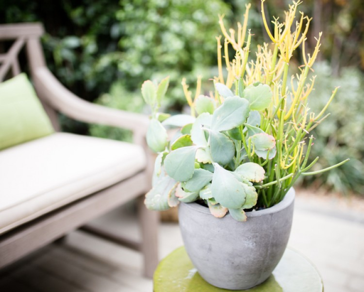 succulent in a pot next to a chair