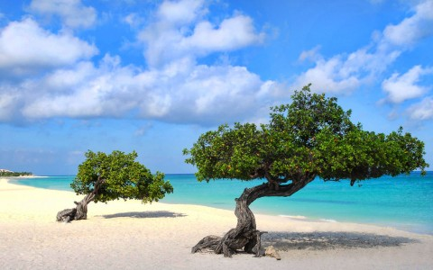 Top Three Reasons Aruba Is The Perfect Spring Break Destination!