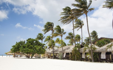 Tiki huts & palm trees on the sand