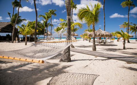 hammock between palm trees on the beach