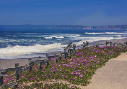 walking path with purple flowers overlooking the pacific ocean