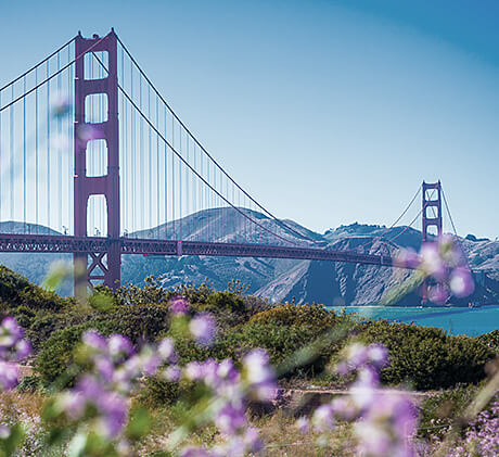 view of golden gate bridge through purple flowers