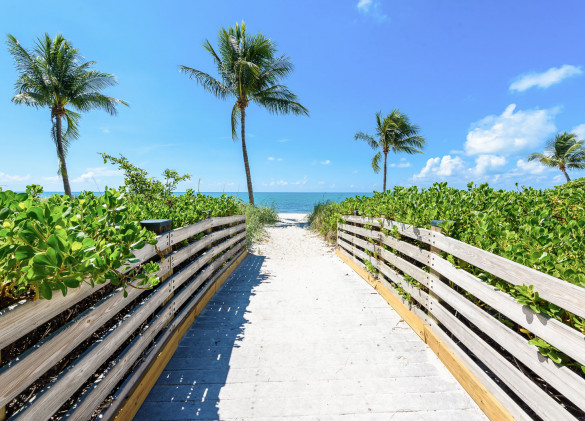 walking path leading to the beach and ocean with palm trees and a clear blue sky