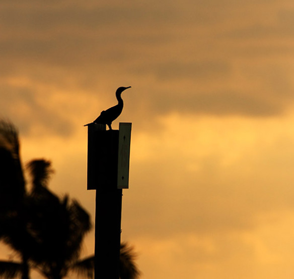 bird sitting on a sign post with a bright orange sunset in background