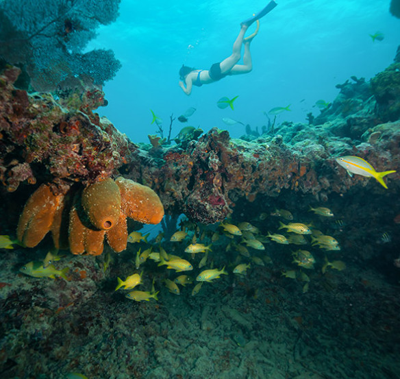 underwater coral reef with person snorkeling and yellow fish
