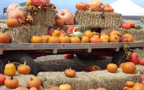 pumpkins on wagon