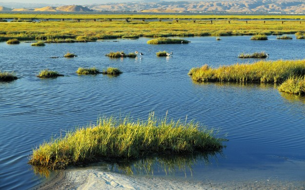 marshy swamp land with rolling mountains in the background