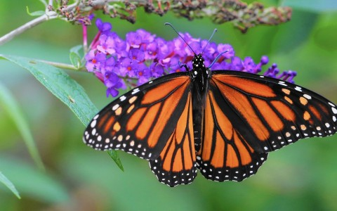 Experience Mackinac Island's Butterfly Conservatory
