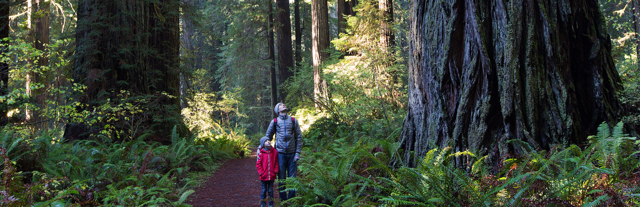 man and child hiking among redwoods