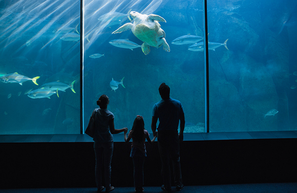 family viewing fish at an aquarium