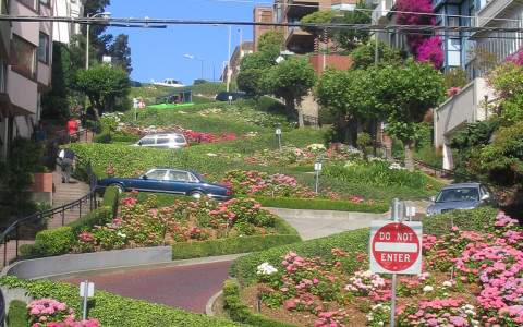 Lombard Street in San Francisco with cars on the road pink flowers curved road and green foliage