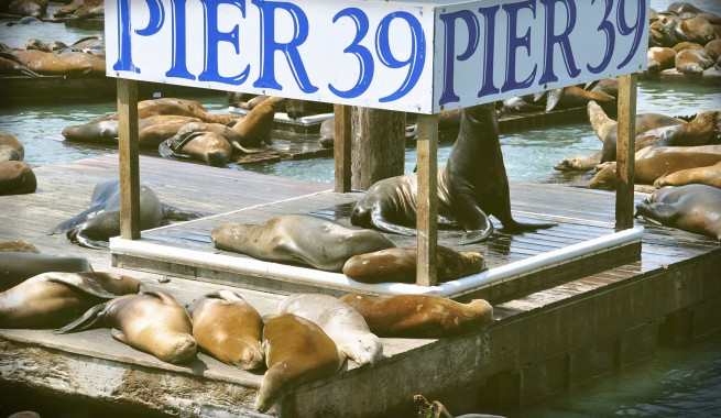 pier 39 sign with seals sunning